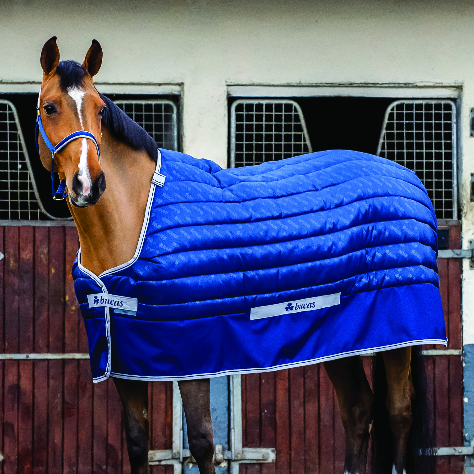 Bucas Select Quilted Stable Blanket